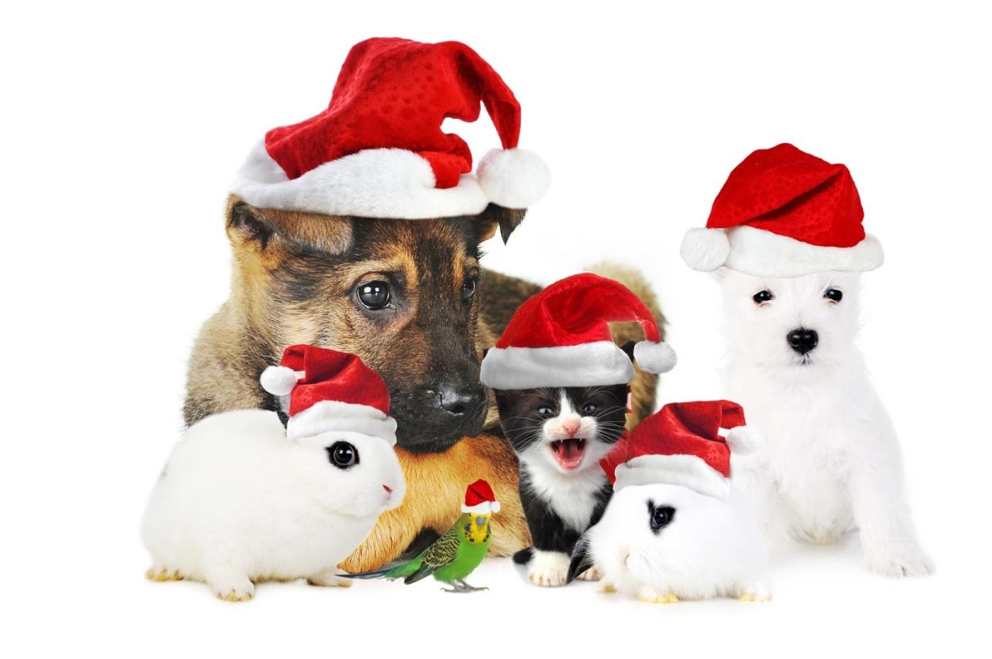 Christmas Party Ideas – Duara Kenya