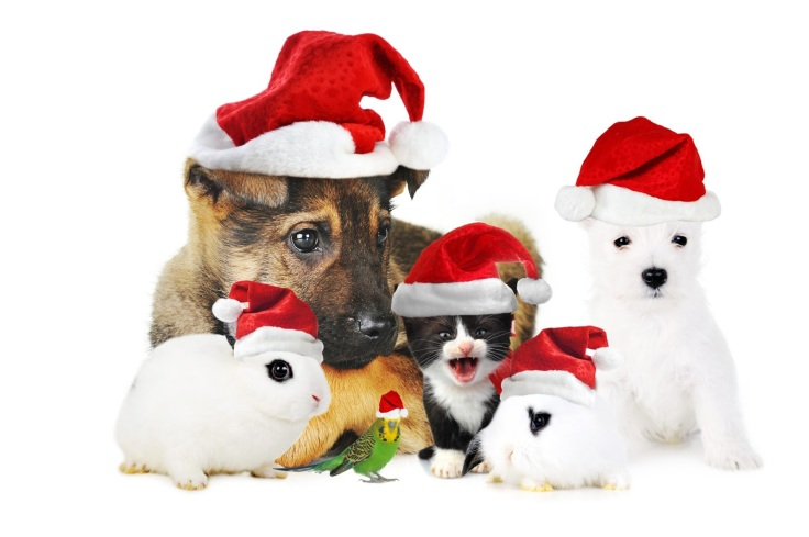 Image result for pets dressed for christmas
